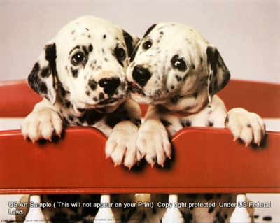 8x10 Inch Dalmation Pups Fine Art Print And Poster Animals